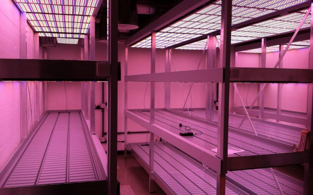 UNIL – Croissance de plante dans la recherche